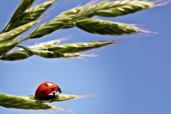 nature-branch-bird-plant-sky-grain-600324-pxhere